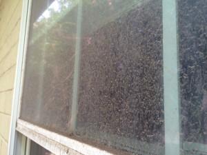 exterior window cleaner